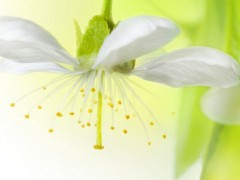 Czym są dzisiaj biokosmetyki?