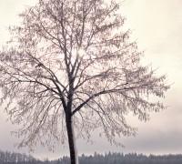 Jak legalnie wyciąć drzewo na działce?