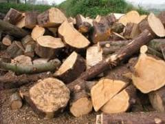 Producenci dbają o jakość drewna