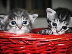 Zakup kuwety dla naszego kota