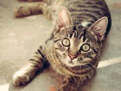 W jaki sposób zaadoptować kota?