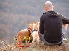 Szelki dla psa – zakładać czy nie?